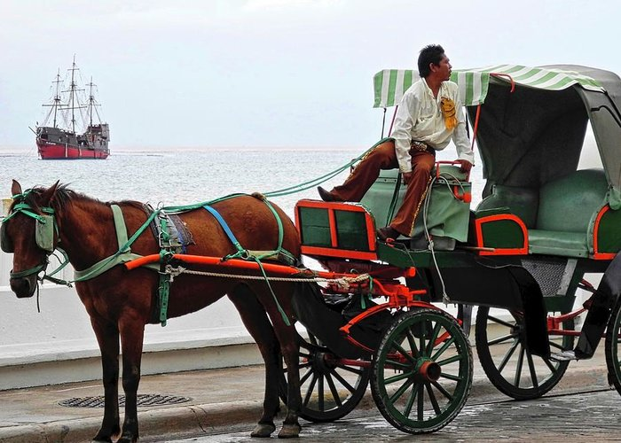 Horse Greeting Card featuring the photograph Lovely Transportation in Cozumel by Kirsten Giving