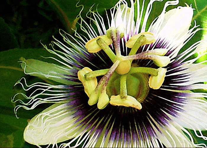 Hawaii Greeting Card featuring the photograph Passion Fruit Flower by James Temple