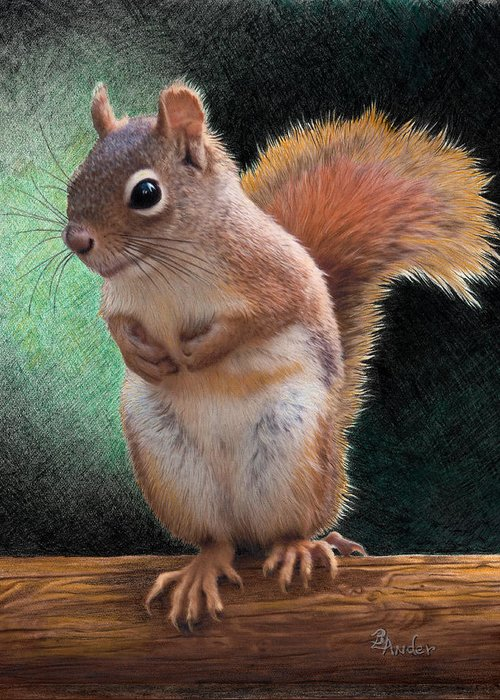 Squirrel Greeting Card featuring the drawing Please by Brent Ander