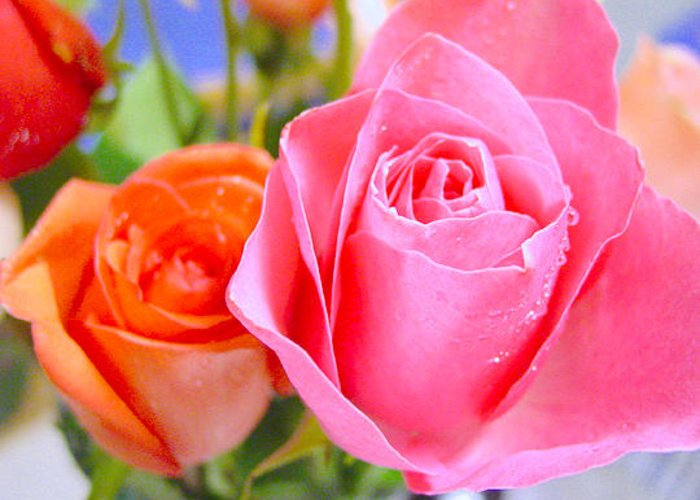 Roses Greeting Card featuring the photograph Roses by Jodi Bauter