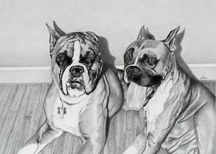 Portrait Of Two Boxers Greeting Card featuring the drawing Sampson And Sophie by Ben Liles