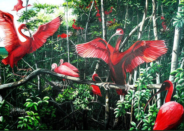 Caribbean Painting Scarlet Ibis Painting Bird Painting Coming Home To Roost Painting The Caroni Swamp In Trinidad And Tobago Greeting Card Painting Painting Tropical Painting Greeting Card featuring the painting Scarlet Ibis by Karin Dawn Kelshall- Best