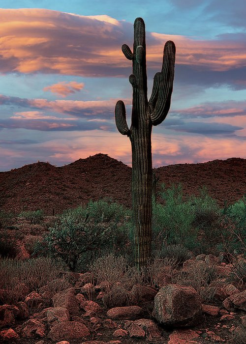 Cactus Greeting Card featuring the photograph Sentinel by Jim Painter