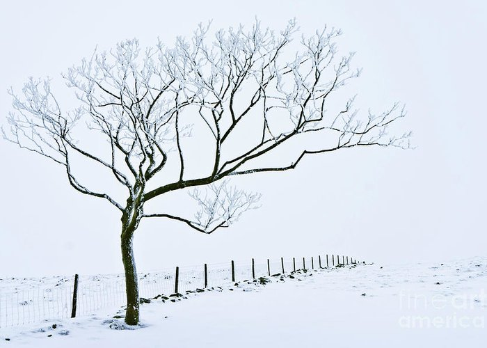 Peak District Greeting Card featuring the photograph Snow Covered Tree And Fence, Peak District, England by Neale And Judith Clark