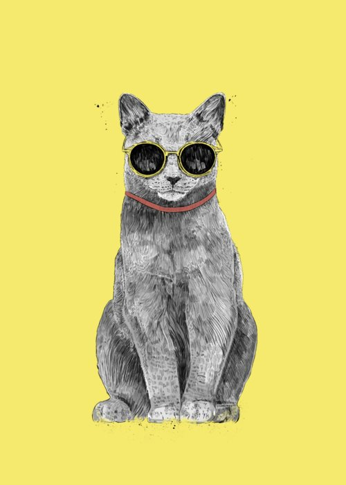 Cool Kitten Greeting Cards