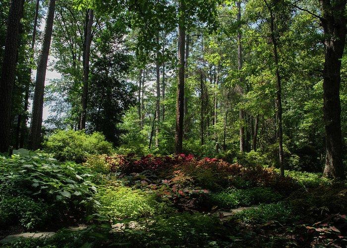 Arkansas Greeting Card featuring the photograph Sunlit Garden by Lea Rhea Photography