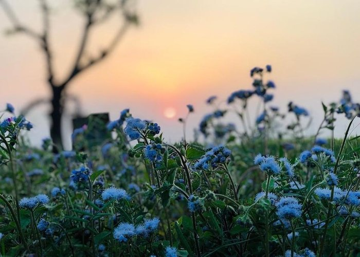 Flowers Greeting Card featuring the photograph Sunset Behind Flowers by Prashant Dalal