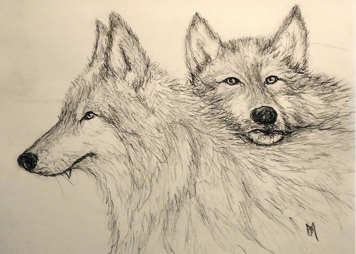 Wolves Greeting Card featuring the drawing Timberwolf by Pete Maier