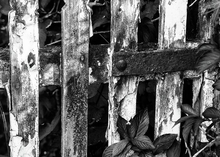 B/w Greeting Card featuring the photograph Weathered Gate by Bear R Humphreys