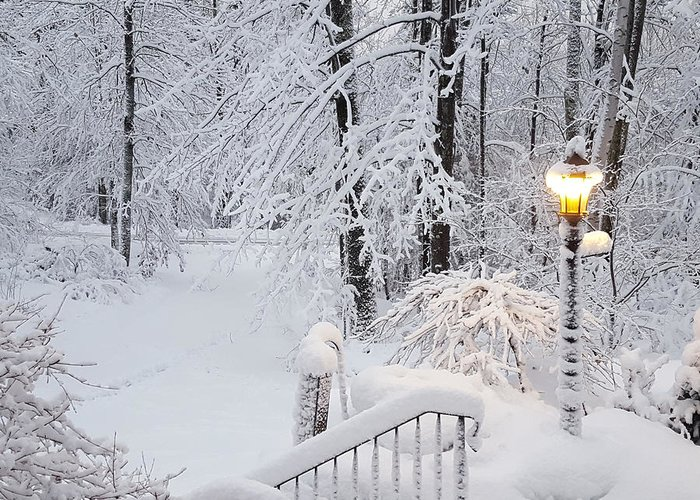 Winter Greeting Card featuring the photograph Winter by Trevor Slauenwhite