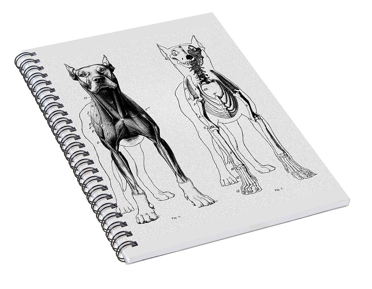 Vintage Dog Anatomy Scientific Illustration Spiral Notebook for Sale ...