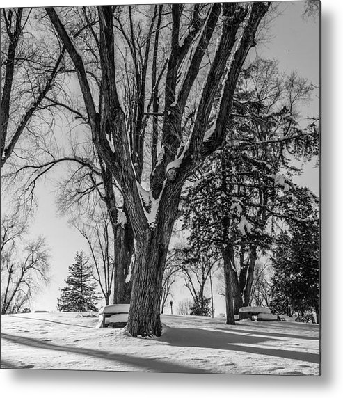 Snow Metal Print featuring the photograph Blanco Y Negro by Gloria Pasko