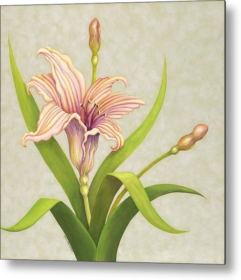 Soft Peach Lily In A Pose Metal Print featuring the painting Peach Lily by Carol Sabo