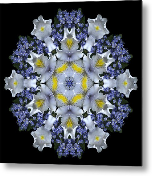 Mandala; Floral; Botanical; Scanner Photography; Scanography;ceanothus; Blue; White; Green; Leaves; Metal Print featuring the photograph Ceanothus Iris Medley 1 by Marsha Tudor