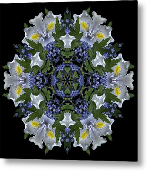 Mandala; Floral; Botanical; Scanner Photography; Scanography;ceanothus; Blue; White; Green; Leaves; Metal Print featuring the photograph Ceanothus Iris Medley 2 by Marsha Tudor