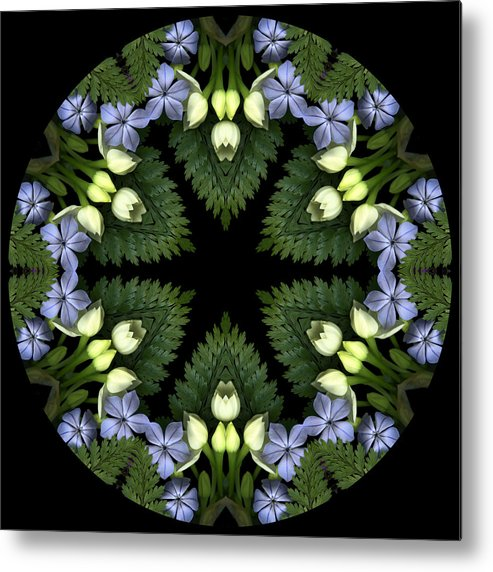 Mandala; Floral; Botanical; Scanner Photography; Scanography; Narcissus Metal Print featuring the photograph Narcissus Group 1 by Marsha Tudor