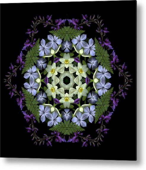 Mandala; Floral; Botanical; Scanner Photography; Scanography; Narcissus Metal Print featuring the photograph Narcissus Group 2 by Marsha Tudor