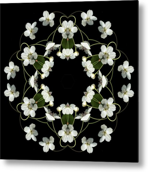 Mandala; Floral; Botanical; Scanner Photography; Scanography; Pear Blossoms; White; Leaves; Metal Print featuring the photograph Orbits by Marsha Tudor