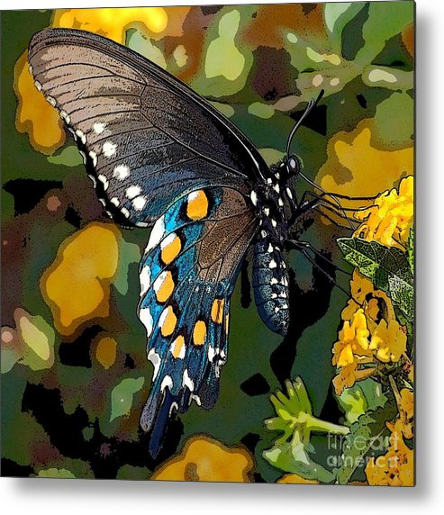 Pipevine Metal Print featuring the photograph Pipevine Swallowtail Butterfly by David Smith