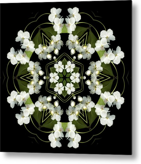 Mandala; Floral; Botanical; Scanner Photography; Scanography; Pear Blossoms Metal Print featuring the photograph Ruffles by Marsha Tudor