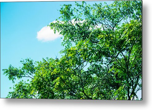 Landscape- Tree Metal Print featuring the photograph In Touch by Theresa Cummings