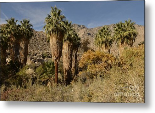 Indian Canyons Metal Print featuring the photograph Indian Canyons by Yinguo Huang