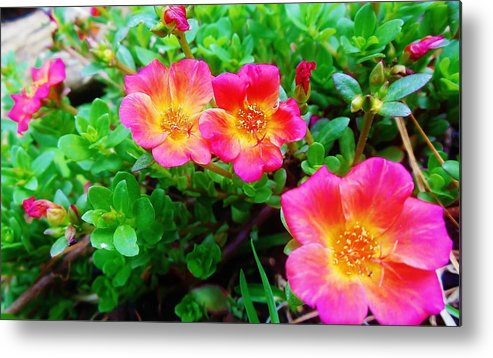 Flowers Metal Print featuring the photograph Pink by Kimberly Dawn Clayton