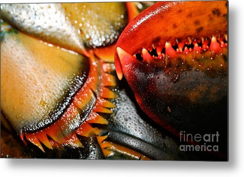 Seafood Metal Print featuring the photograph American Lobsters by Matt Suess