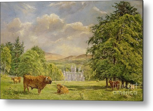 Landscape; Highland Cattle; Angus; Cow; Royal Residence;scottish Baronial; Horn; Horns Park; Bulls; Bull; Balmoral Castle; Balmoral; Hill; Hills; Tree; Trees; Grass; Green; Scottish Metal Print featuring the painting Bulls At Balmoral by Tim Scott Bolton