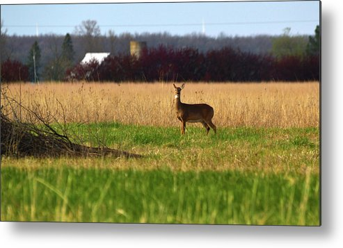 Field Metal Print featuring the photograph On Alert by Linda Kerkau