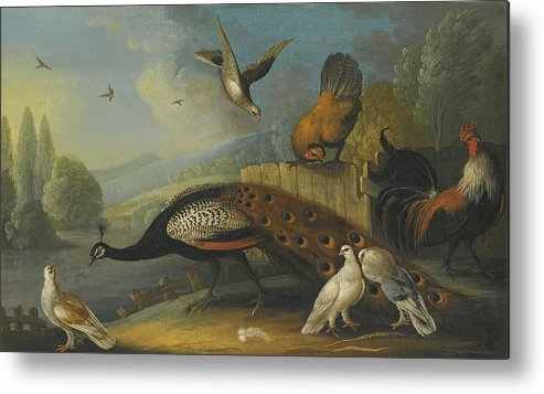 Marmaduke Cradock Metal Print featuring the painting A Still Life With A Peacock, Pigeons And Chickens In A River Landscape by Marmaduke Cradock