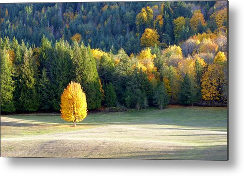 Autumn Metal Print featuring the photograph Autumn Gold by Elaine Bawden