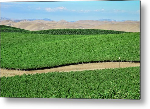 Agriculture Metal Print featuring the photograph California Vineyards 3 by David A Litman