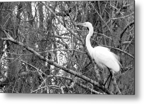 Bird Metal Print featuring the photograph Camouflage by Edward Smith