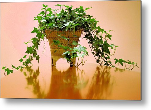 Ivy Metal Print featuring the photograph English Ivy by Kristin Elmquist