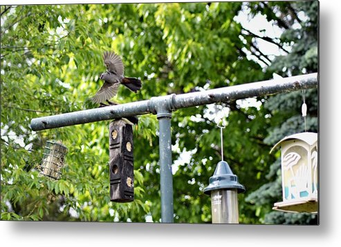 Birds Metal Print featuring the photograph In Flight by Cassandra Dice