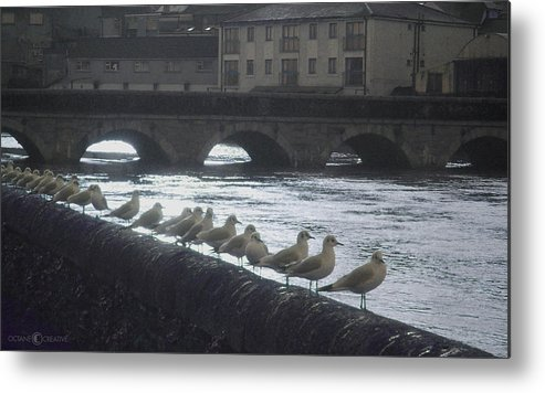 Birds Metal Print featuring the photograph Line Of Birds by Tim Nyberg