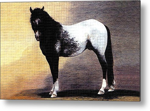 Appaloosa Horse Portrait Metal Print featuring the drawing Appaloosa Horse Portrait by Olde Time Mercantile