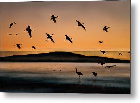 Lake Metal Print featuring the photograph Fly-in At Sunset by Shenshen Dou