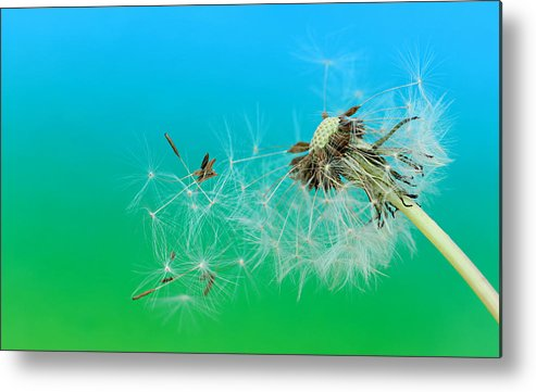Drops Metal Print featuring the photograph It's Summer by Heike Hultsch