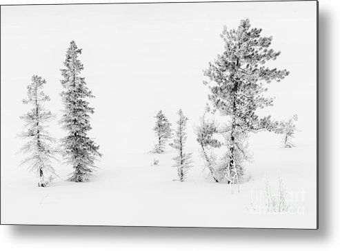 Nature Metal Print featuring the photograph Trees With Hoar Frost by John Shaw