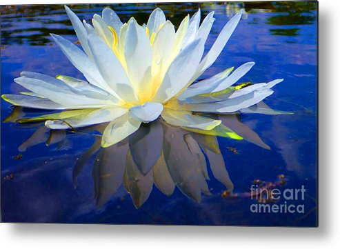 Water Metal Print featuring the photograph Upekkha by Catherine Lottes