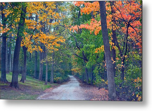 Forest Metal Print featuring the photograph Journey by Autumn Wade
