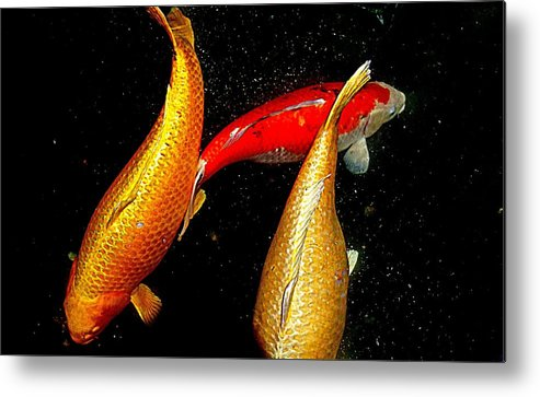 Koi Metal Print featuring the photograph Koi Story Three B by Randall Weidner