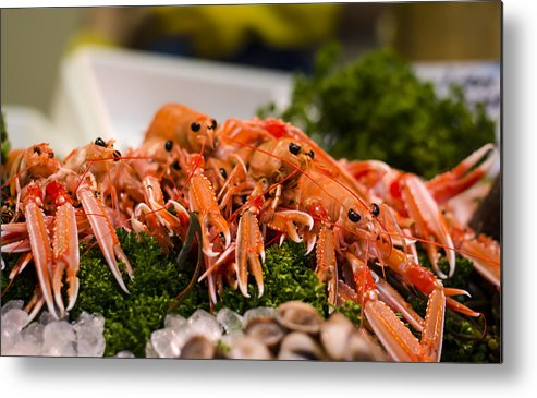 Norway Lobster Metal Print featuring the photograph Langoustines At The Market by Heather Applegate