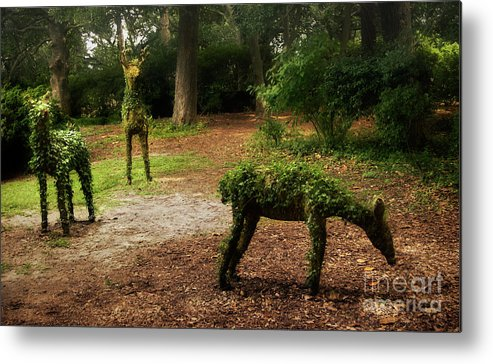 Topiary Metal Print featuring the photograph Topiaries by Susan Isakson