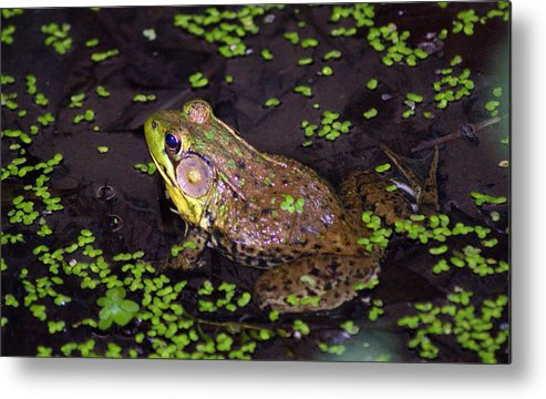 Frog Metal Print featuring the photograph A Frog's Reflection by Kat Dee
