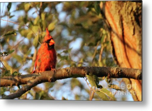Red Metal Print featuring the photograph A Spot Of Red In The Trees by Scott D Van Osdol