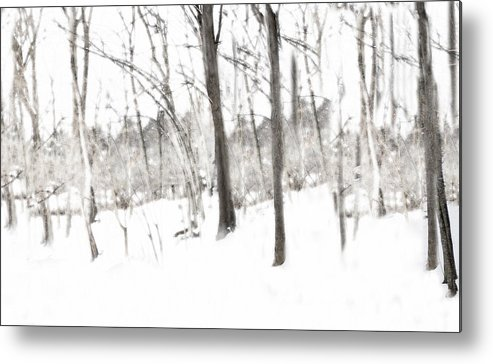 Trees Metal Print featuring the photograph A Walk In The Woods by Kathy Jennings