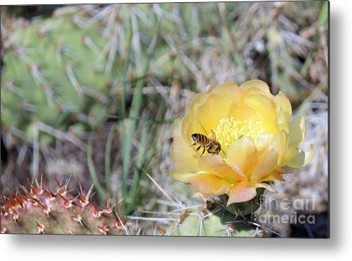 Nature Metal Print featuring the photograph Blooming Cactus by Tonya P Smith